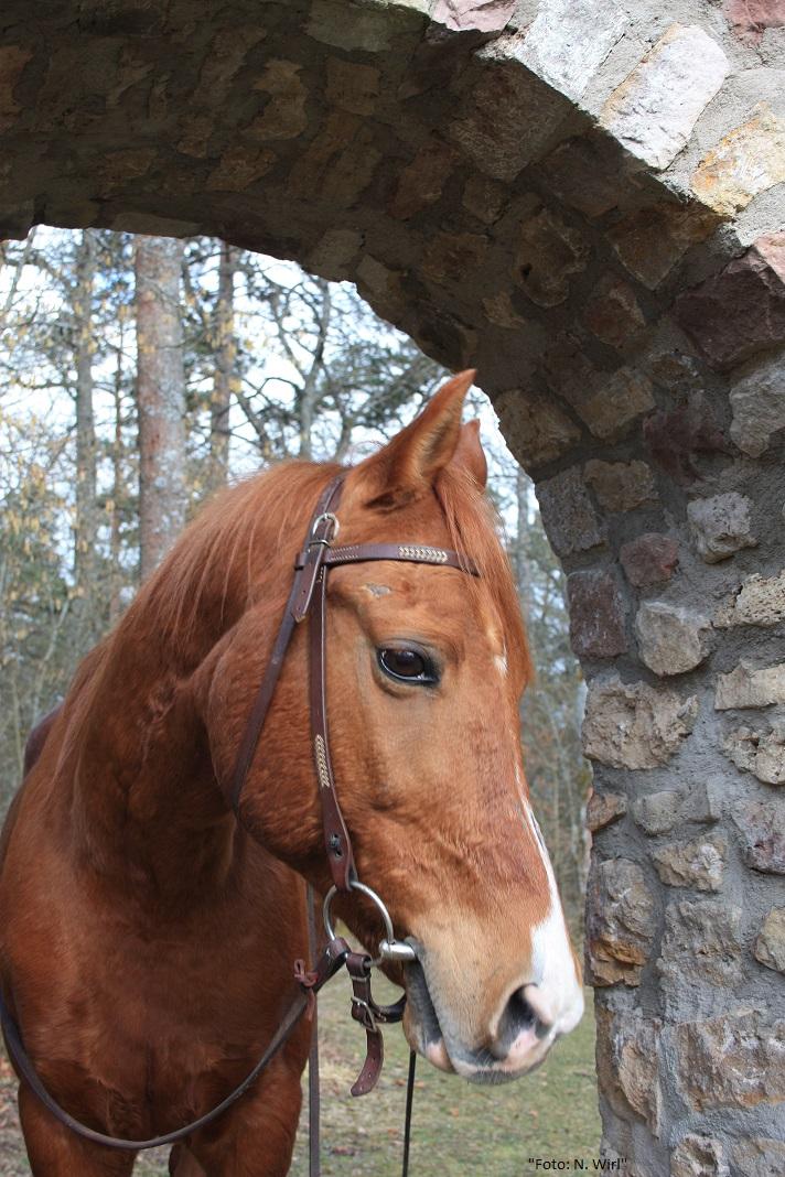 Geocaching mit Pferden_017