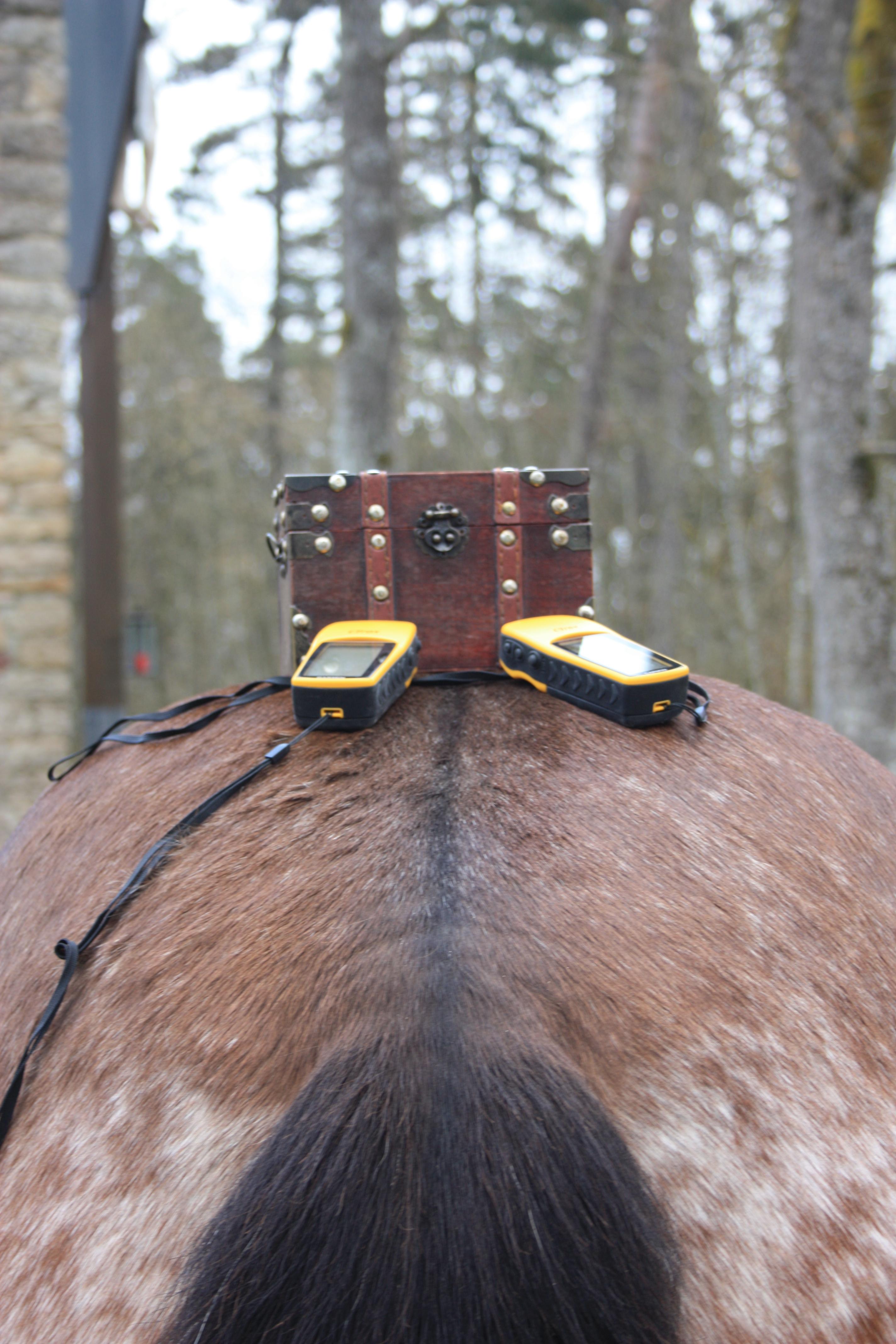 Geocaching mit Pferden_035